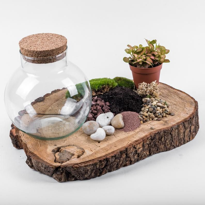 kit terrarium cadeau