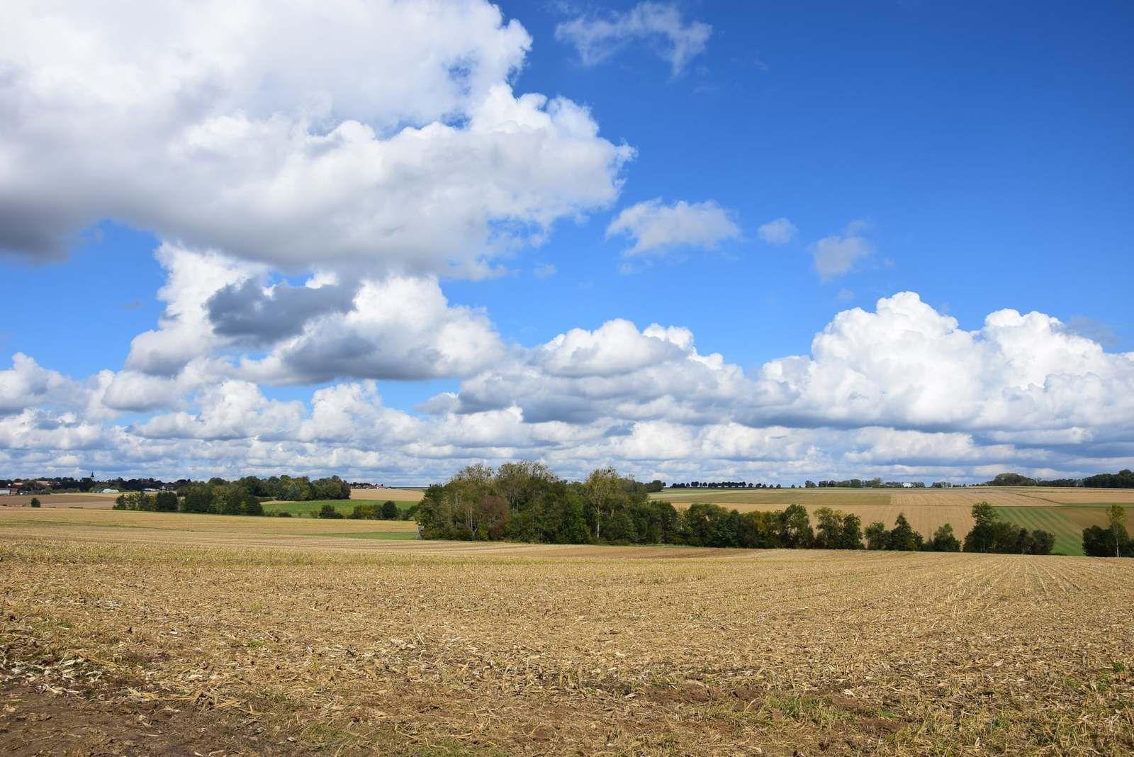 Les parcelles de terres agricoles sont souvent bordées de peupleraies
