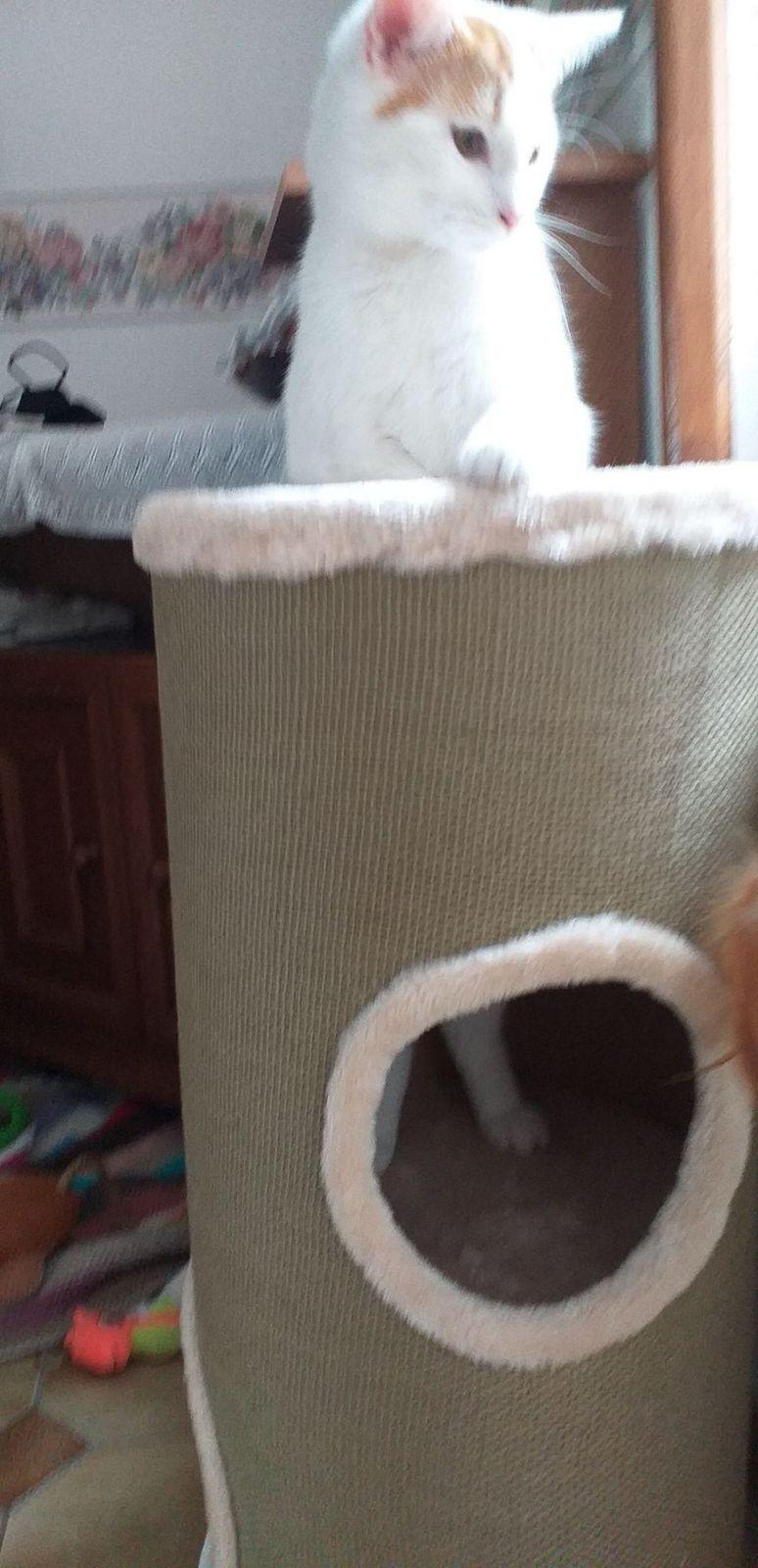 chronique Lennon : il découvre son nouvel arbre à chats