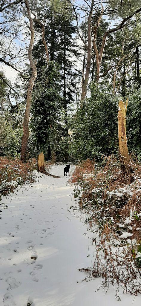 Soleil sur neige