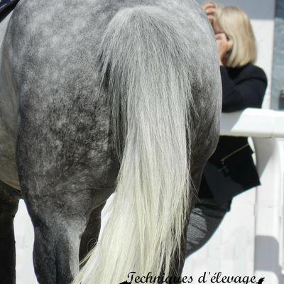 Un exemple de relation avec le cheval : monologue