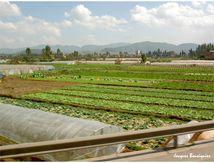 Le jardin potager de Kunming
