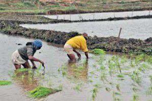 Madagascar – Japon: Un don de 30 millions USD pour réhabiliter le périmètre à Alaotra