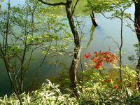 """1ere image: Etendue de feuilles de bambous Sasa. Vendues en France pour """"japoniser votre jardin""""!"""