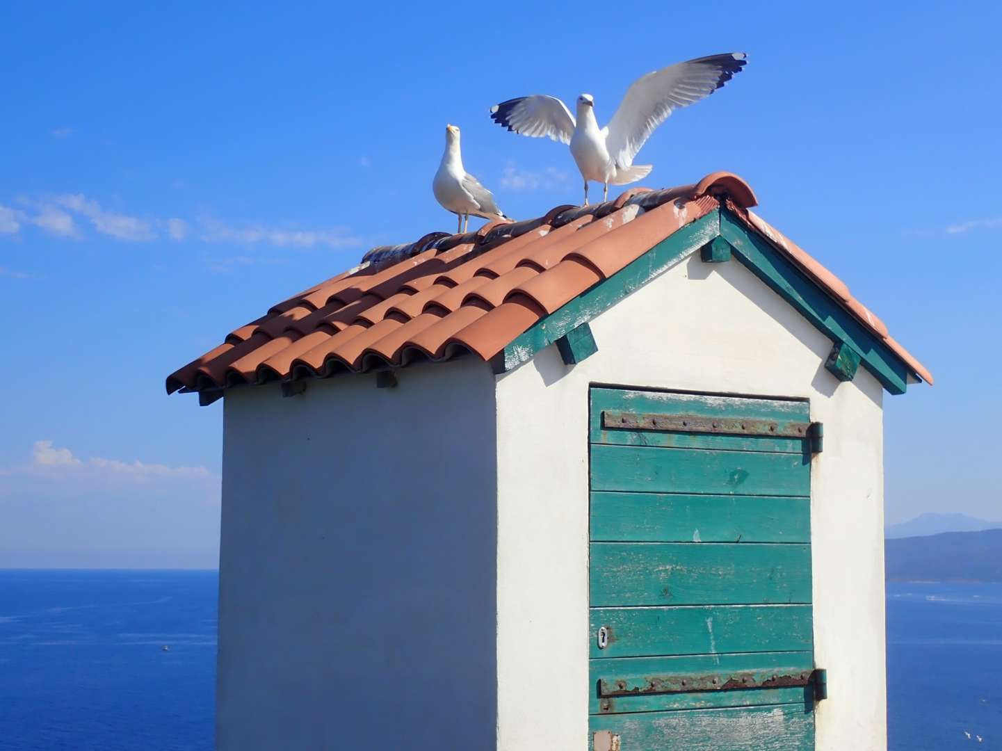 Corsica 2021, la beauté, essentielle, de la nature - Chapitre 18 : les îles Sanguinaires, Capo di Feno