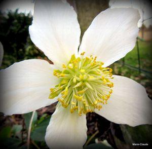 Quelques fleurs du jardin, pour un dimanche sombre,