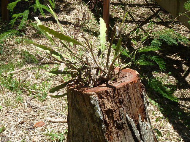 Album - 2011-chutes d'Iguazu-Argentine
