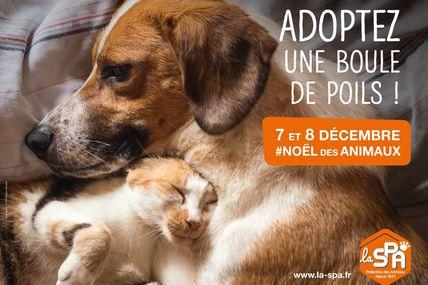 Le Noël des Animaux de la SPA les 7 et 8 décembre
