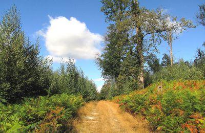en forêt de Retz_84_08_2020_la Laie du Petit Bois d'Haramont