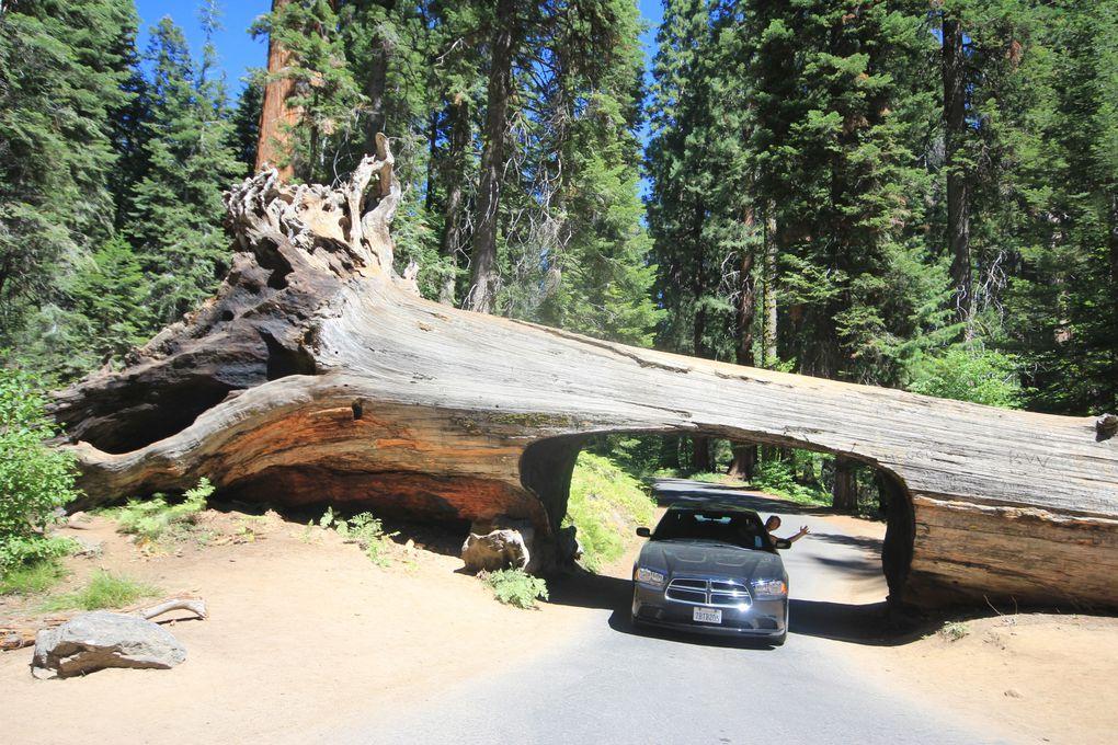Album - Yosemite - Orange County