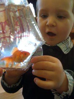 Activités pédagogiques autour du poisson rouge en classe de TPSM