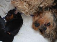 Fidji a eu 3 mâles et 1 femelle, à 5 jours aujourd'hui ils pèsent entre 194 gr à 128 gr !