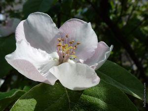 Quelques fleurs de mon jardin...