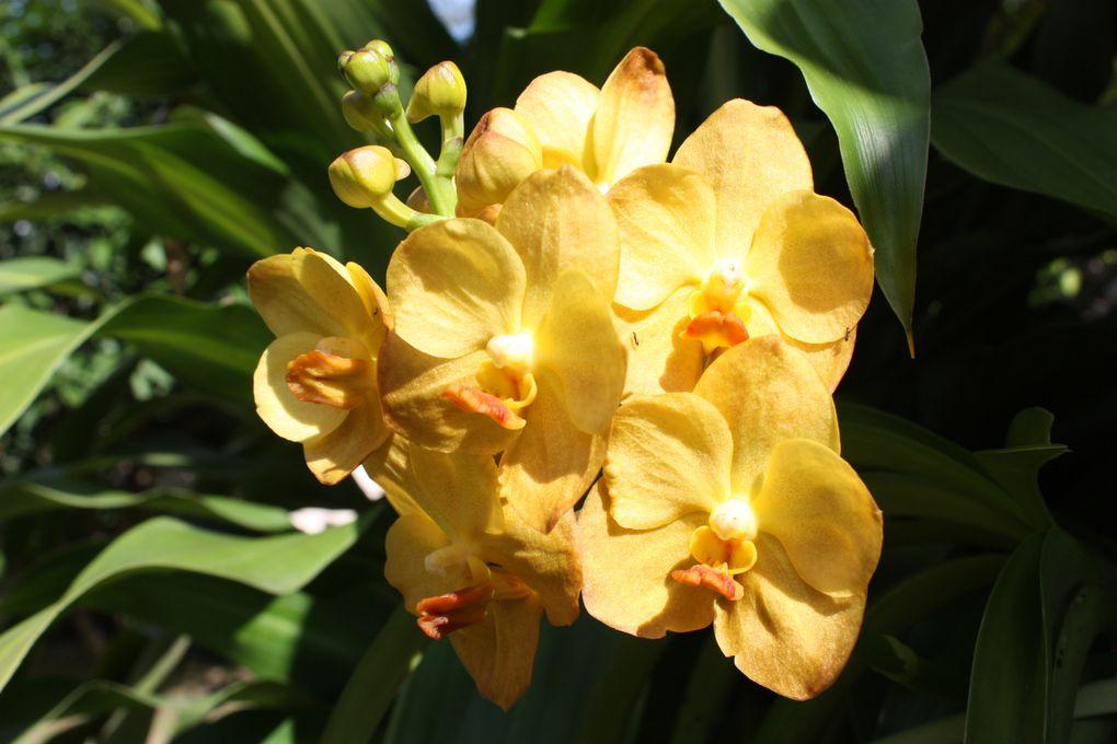 c'est aussi une de mes passions de cultiver les fleurs et de les admirer.