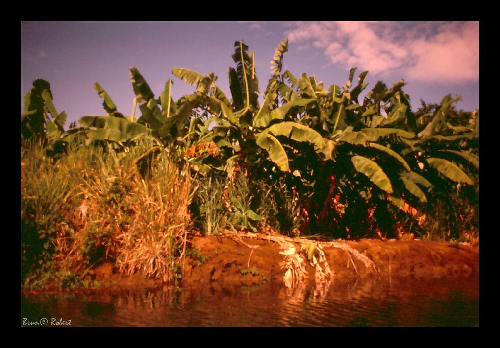 Guadeloupe et Martinique 1984