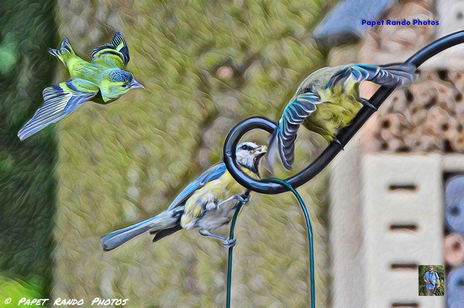 Deux journées , au nouveau coin, photos d'oiseaux  du jardin,  speciale heure du repas, des nouveaux venus