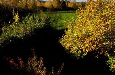 Images d'automne dans la Manche