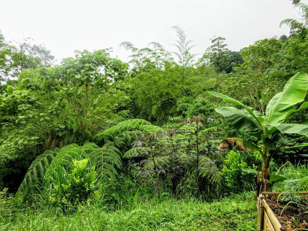 Verde que te quiero verde, avec les campesinos du Valle del Cauca (1/6 août 2018)