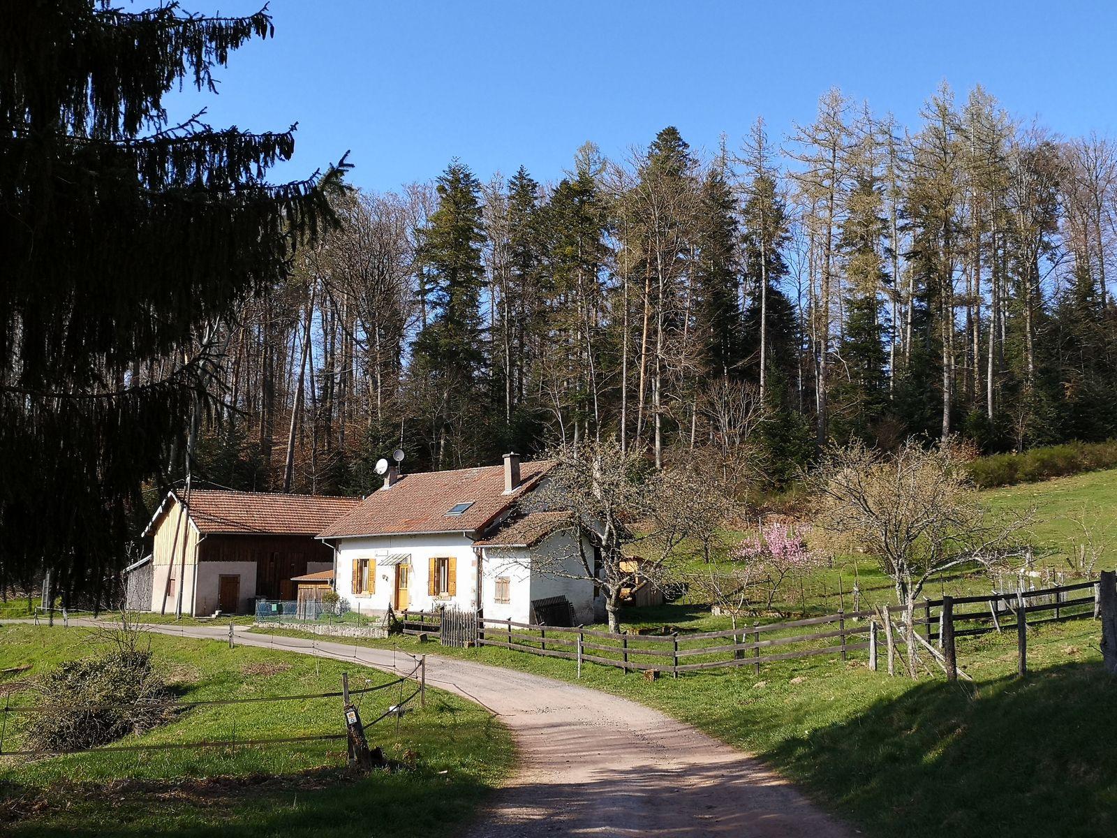 La Maison Forestière Bodenmark