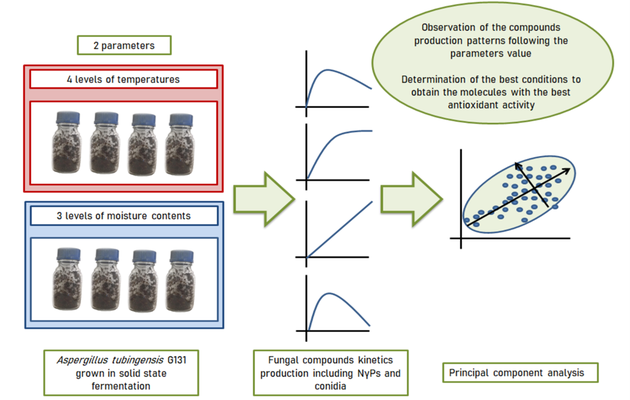 Statistical approach to evaluate effect of temperature and moisture content on the production of antioxidant naphtho-gamma-pyrones and hydroxycinnamic acids by Aspergillus tubingensis in solid-state fermentation