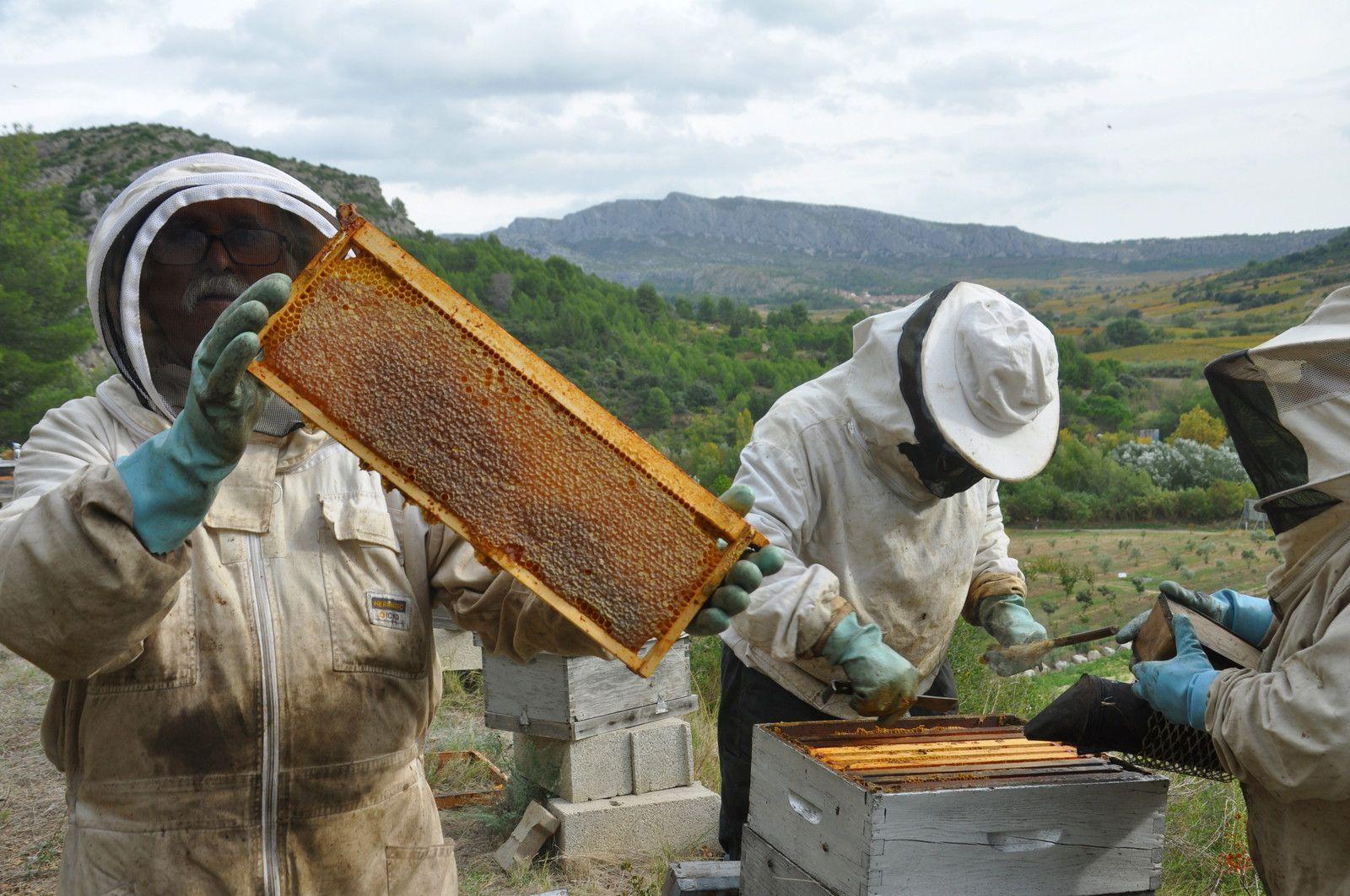 Au rucher de l'homme de Tautavel le 20 octobre 2020 avec 65 photos et 6 vidéos