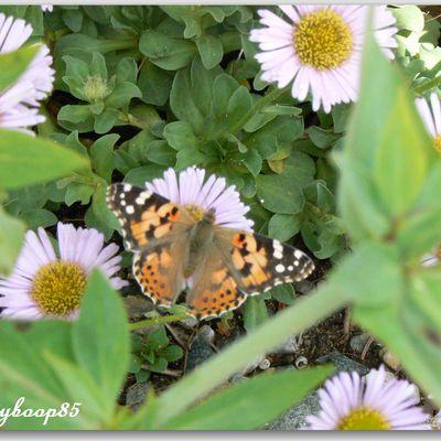 C'est l'effet papillon ....