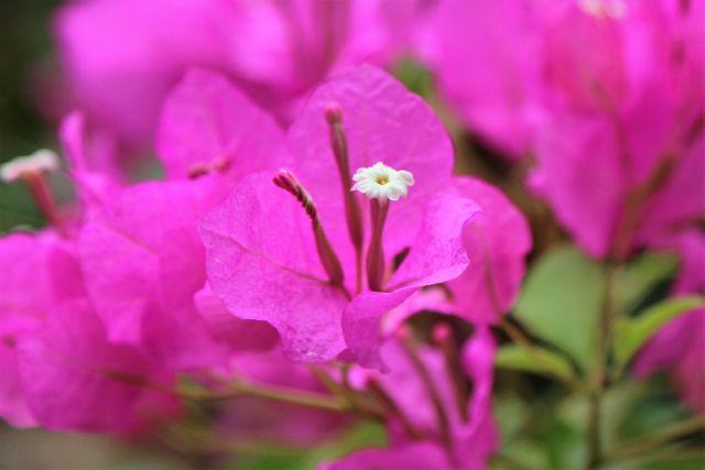 Les fleurs du Liban