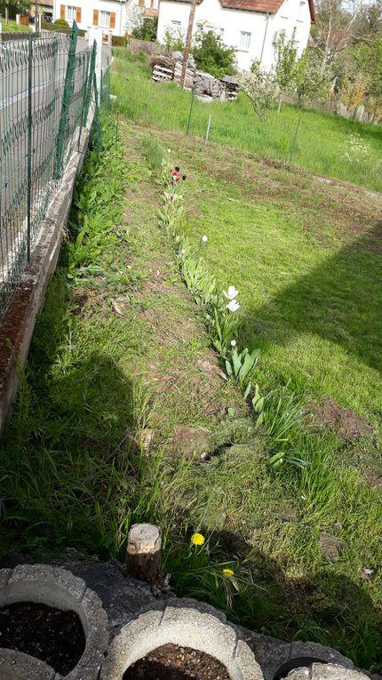 Au jardin en ce mois de mai