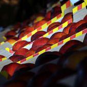 1ère fête de la pêche et de la nectarine au lac du Soler en 40 photos - Autour de