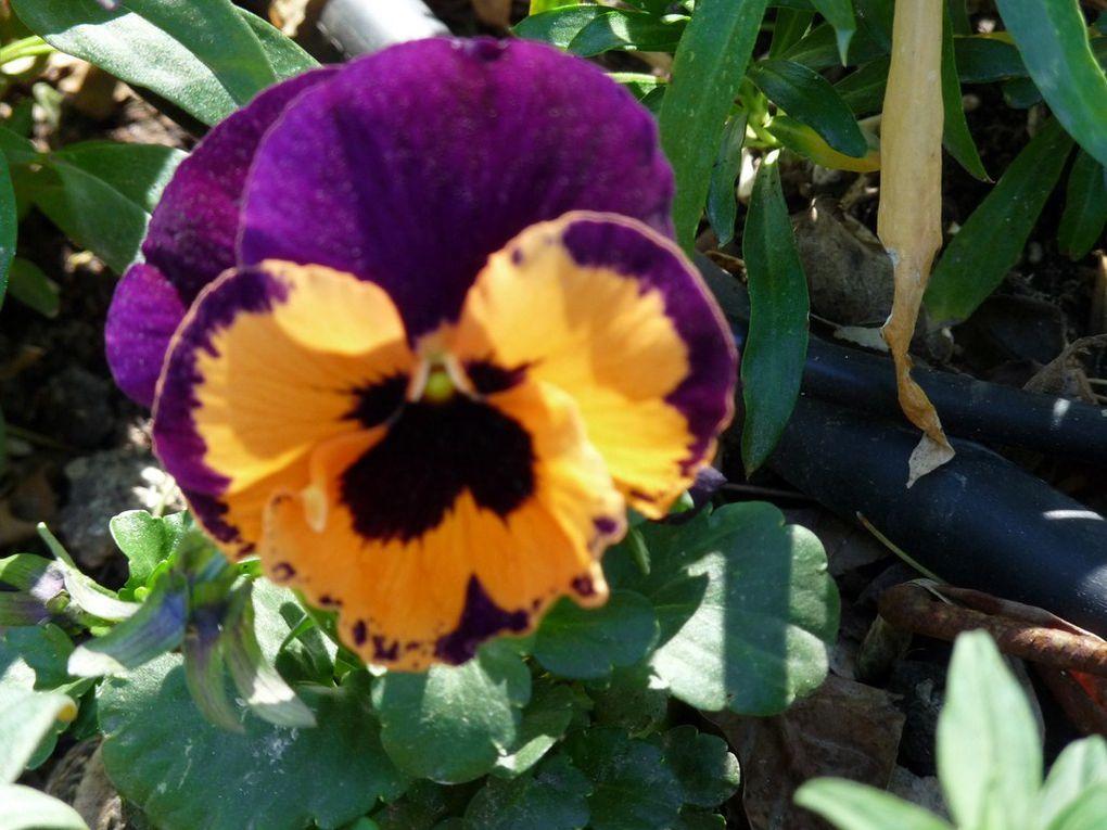 Fleurs 22
