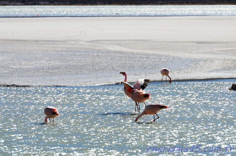 Laguna Hédionda (Bolivie en camping-car)
