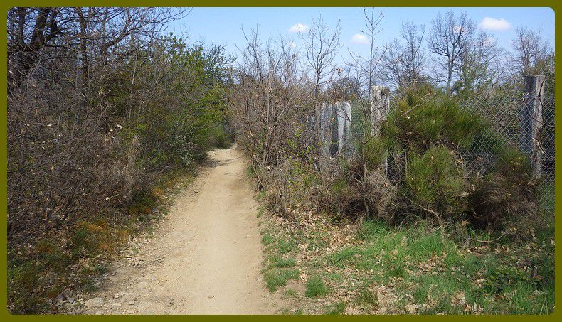 Vinzieux Trail.