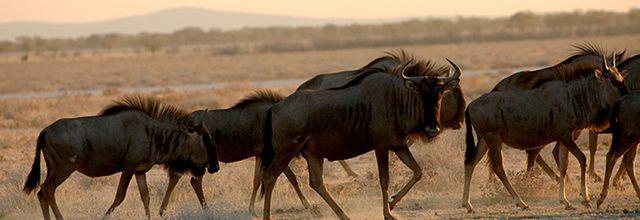 Traversée d'Afrique du Niger à la Namibie