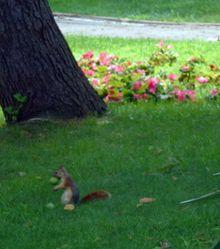 Les écureuils d'Istanbul...
