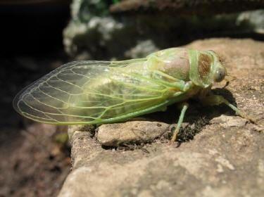 Insectes et petites bêtes de nos montagnes.