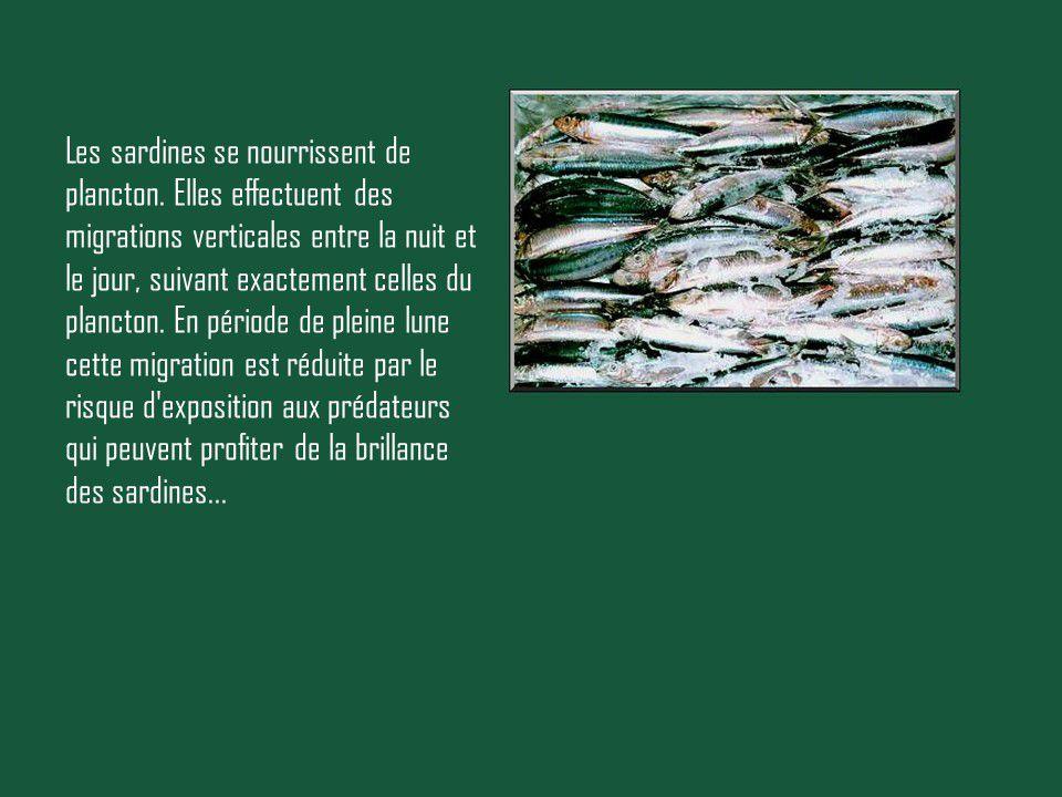 Divers - Les Sardines
