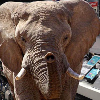 SMARTPHONES, un éléphant serait-il entré soudain dans un vaste magasin de porcelaine...