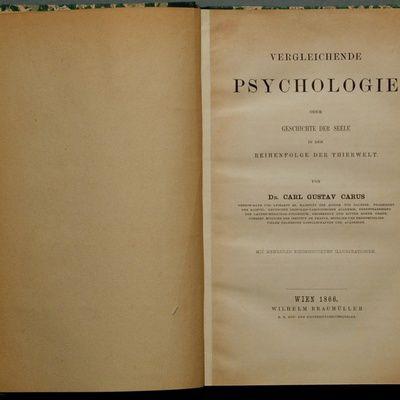 Quelles  études suivre pour obtenir un diplôme en psychologie ?