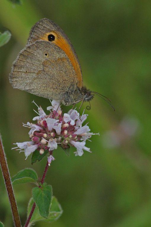 Album - papillons au parc des beaumonts