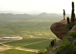 The vine in Rioja Argentina