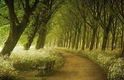 La Forêt et la Bruyère - de Carl Ewald, auteur danois