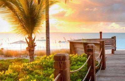 Nature - Palmiers - Ponton - Mer - Soleil - Photographie - Wallpaper - Free
