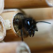 Plus aucun insecte dans 100 ans : 6 idées pour lancer une opération de sauvetage !
