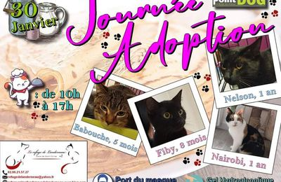 Journée adoptions chats point dog Brest