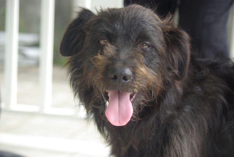 SAM - croisé griffon - 2 ans - adopté - décédé