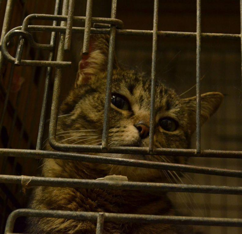 Elle est adoptée !!! : SIA,  jeune chatte stérilisée de 10 mois
