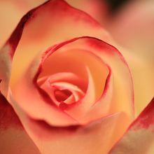 La fleur au cœur