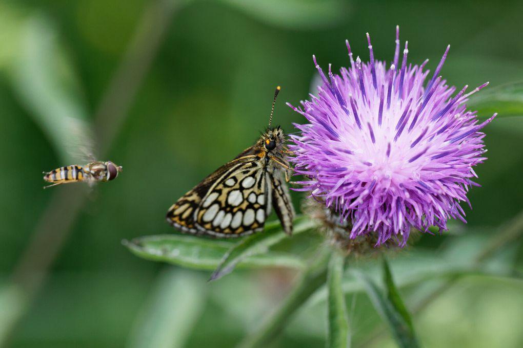 578 - La Danse des Papillons.... spectacle à voir et à revoir ;) : 24/07/2021