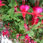 anne-marie.piffaut.overblog.com