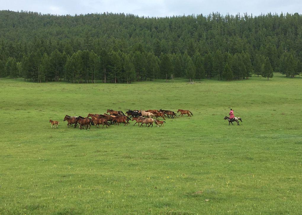 Edelweiss. Gentianes. Arc en ciel. Yaks et chevaux